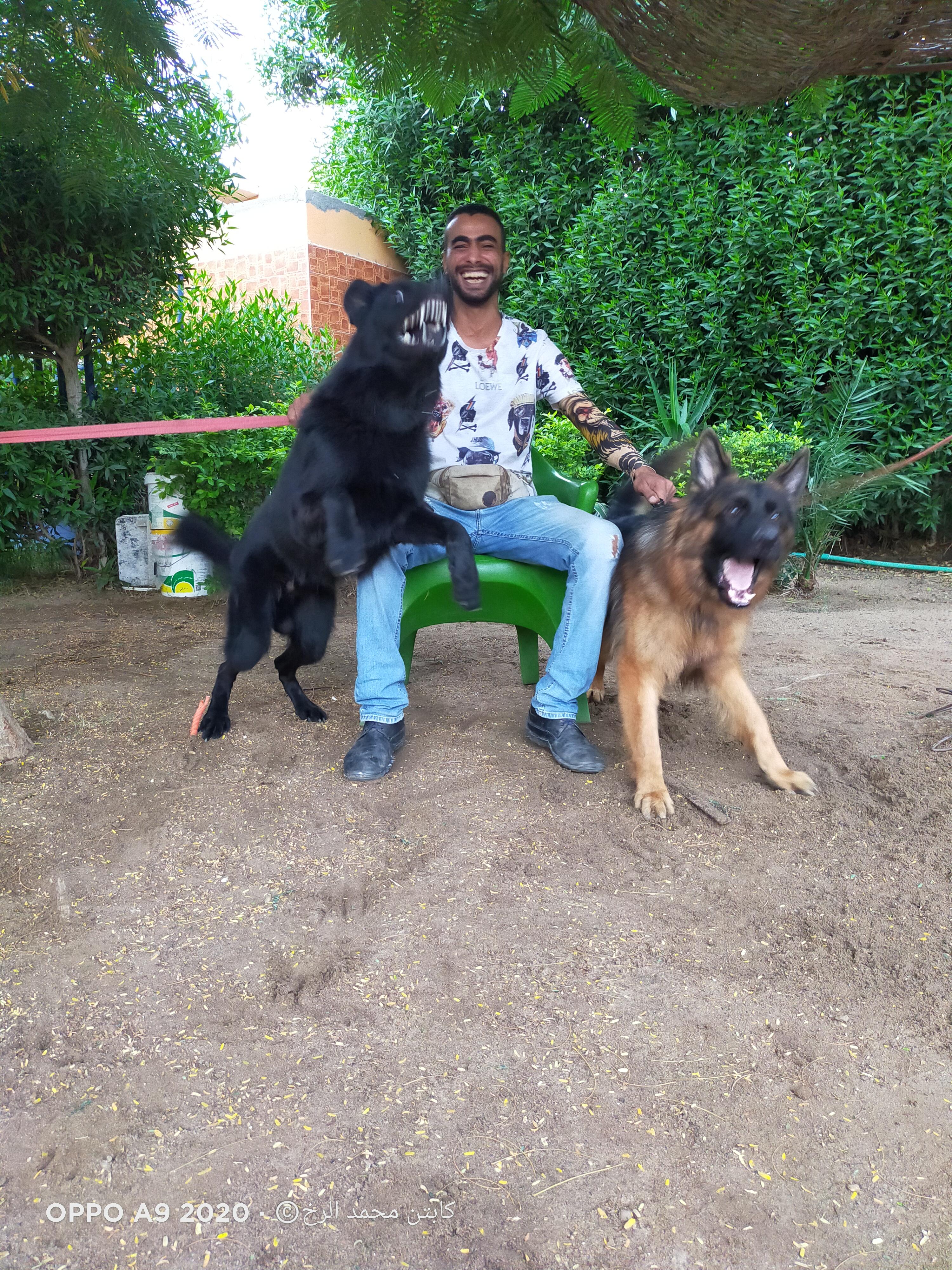 DOG ROOK Training
