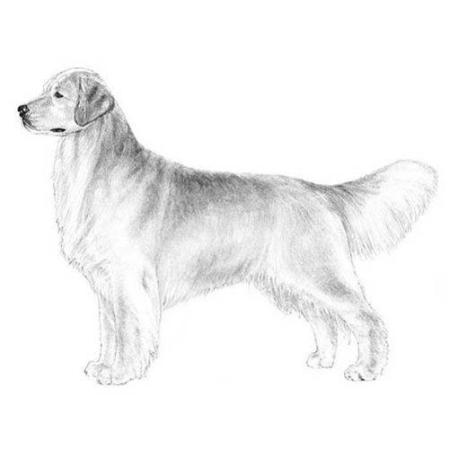 CLARA HAPPY DOG KENNEL