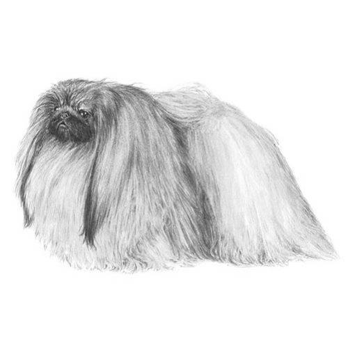 R-LAMITA DOGS DECORATIONS