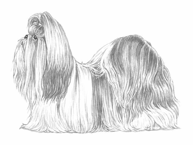 TAMARA DOGS DECORATIONS